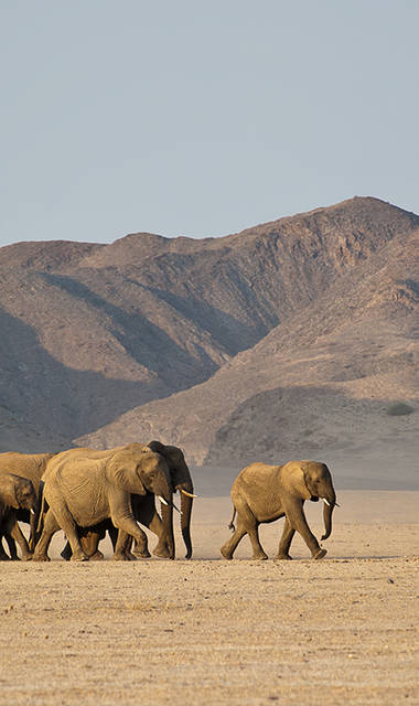 12-daagse privé rondreis - exclusief vliegreis Namibië in Vogelvlucht - standaard