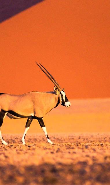 16-daagse groepsrondreis - inclusief vliegreis Zinderend Namibië (standaard accommodaties)