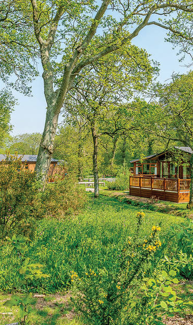 Wareham Forest Lodge